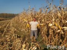 PK-001 Organikus Kukorica előrendelési AKCIÓ! Az igazi kukorica!