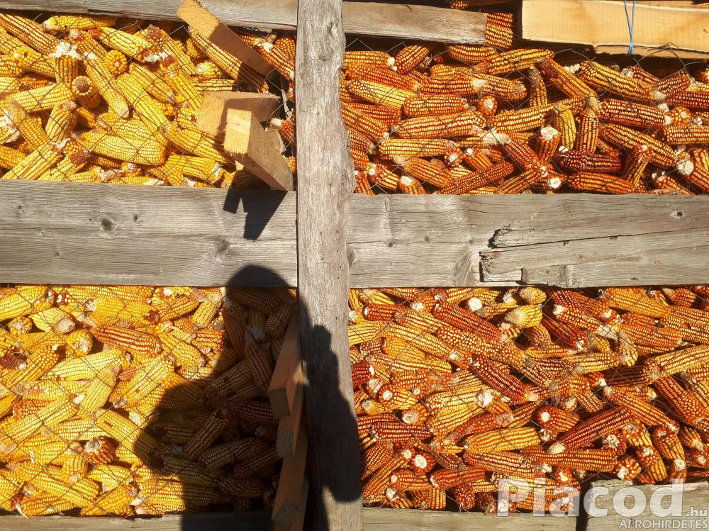 PK-003 - Állattartóknak! Organikus kukorica előrendelési AKCIÓ!