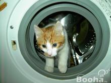 Hűtők, mosógépek javítása