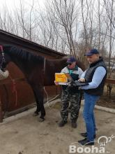 Gyors fájdalommentes biorezonanciás diagnosztika a lovadnak!