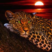 Alvó tigris design egyedi szublimált textil méteráruhoz