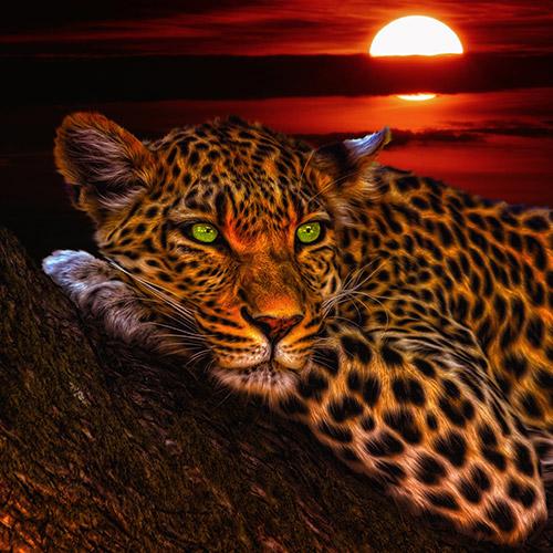 Alvó tigris