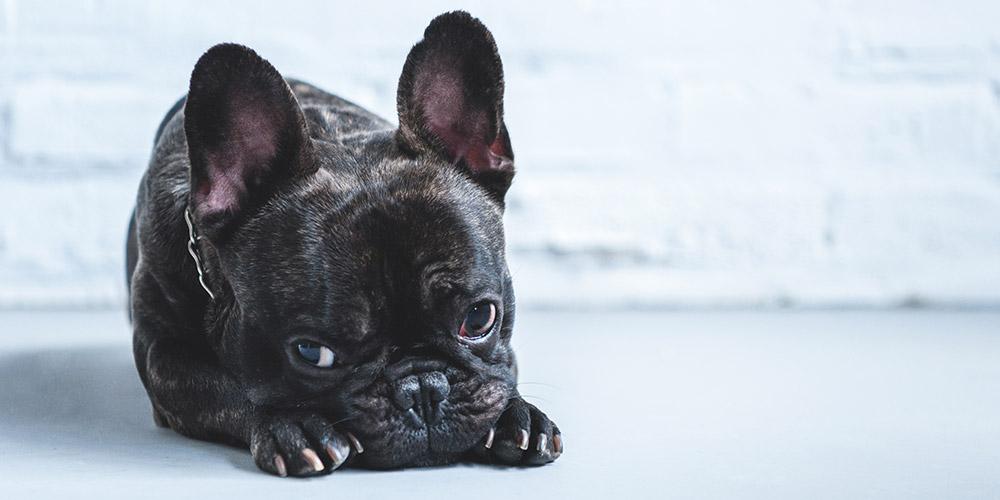 Bulldog design egyedi szublimált textil méteráruhoz