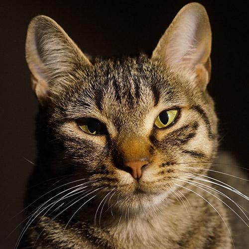 Cirmos cica design egyedi szublimált textil méteráruhoz