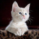 Fehér cica design egyedi szublimált textil méteráruhoz