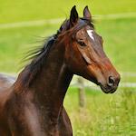 Futó ló design egyedi szublimált textil méteráruhoz