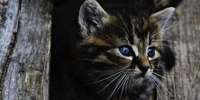Kicsi cirmos cica design egyedi szublimált textil méteráruhoz