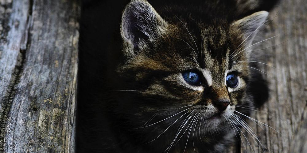 Kicsi cirmos cica
