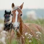 Ló a mezőn design egyedi szublimált textil méteráruhoz