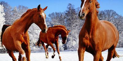 Lovak a havas tájon design egyedi szublimált textil méteráruhoz