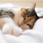 Tarka cica design egyedi szublimált textil méteráruhoz
