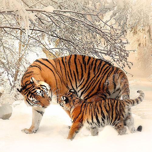 Tigris kölyökkel