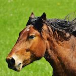 Vágtató ló design egyedi szublimált textil méteráruhoz
