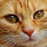 Vörös cica design egyedi szublimált textil méteráruhoz