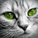 Zöld szemű cica design egyedi szublimált textil méteráruhoz