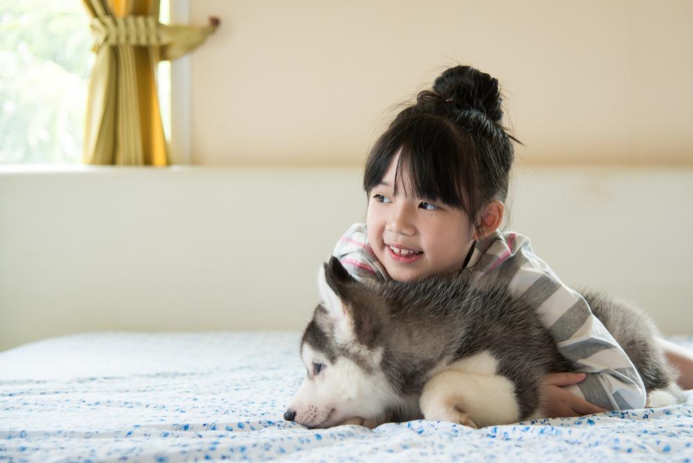 Zwierzęta domowe - ubezpieczenie podróżne