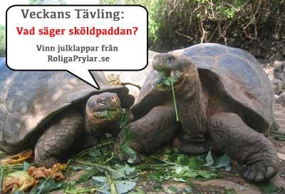 vad säger sköldpaddan?
