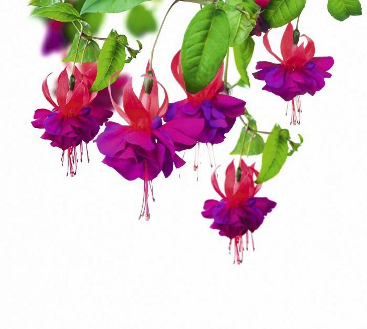 Kwiaty Balkonowe 10 Hitów Wśród Roślin Doniczkowych Na Balkon