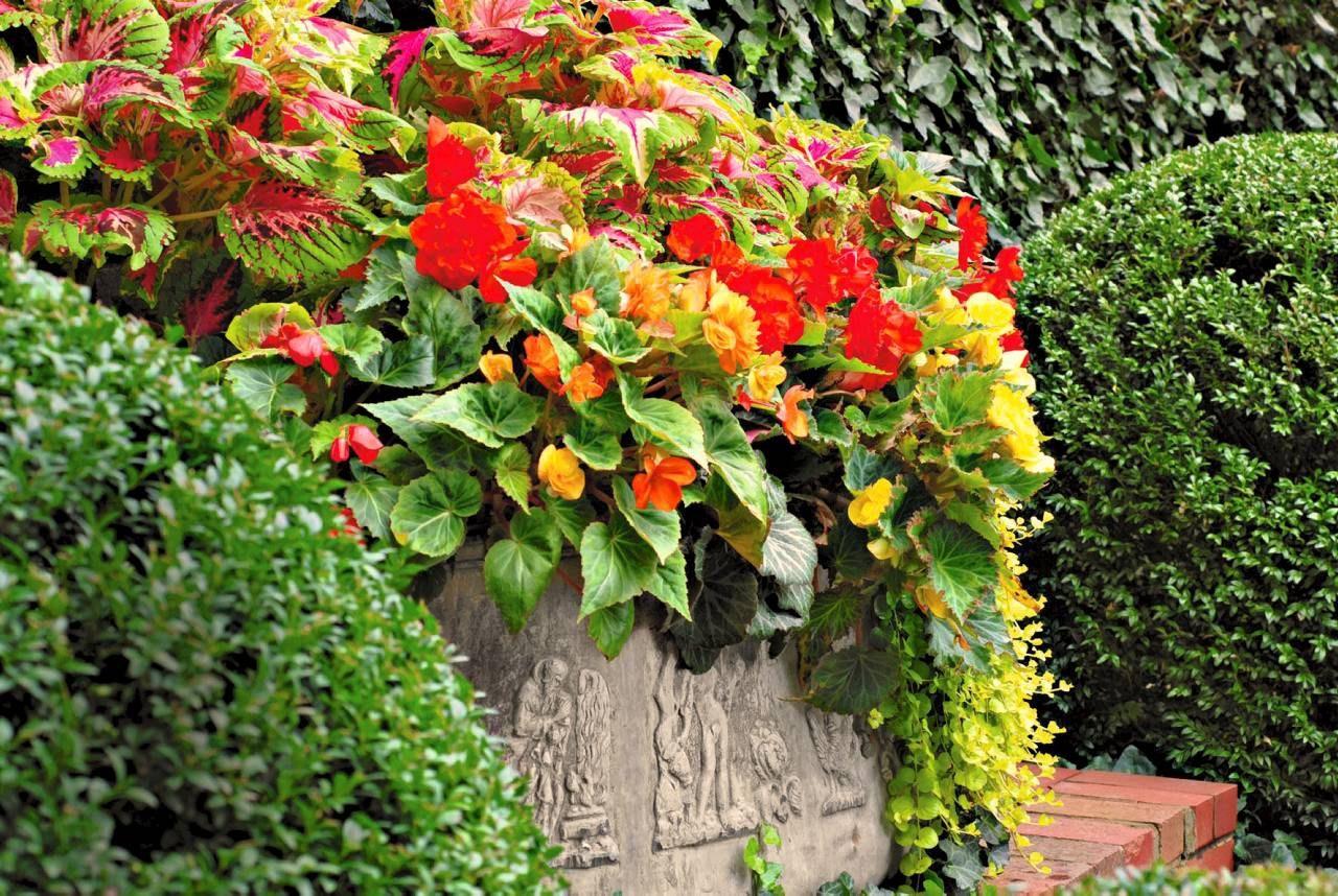 Kwiaty Na Balkon W Cieniu
