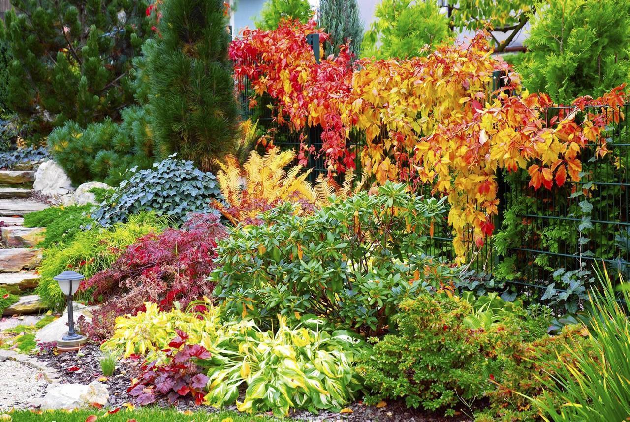Ogród Dla Niecierpliwych Rośliny Szybko Rosnące E Ogrody
