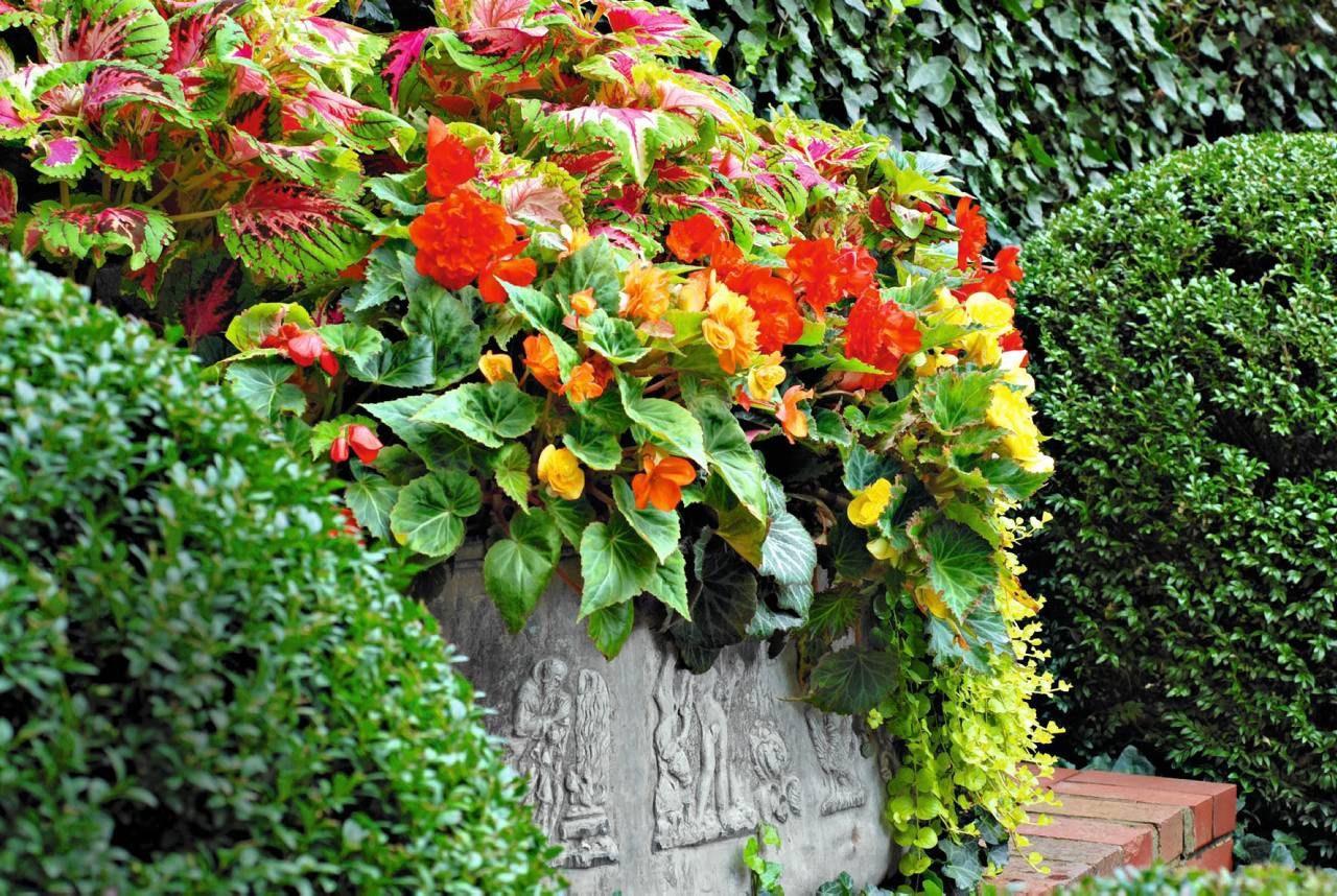 Kwiaty Na Cienisty Balkon