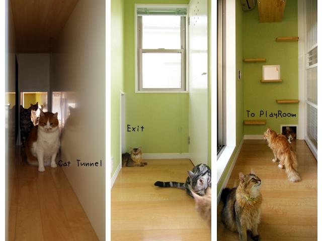 Kocie Domy Właściciele Zamienili Swoje Mieszkania W