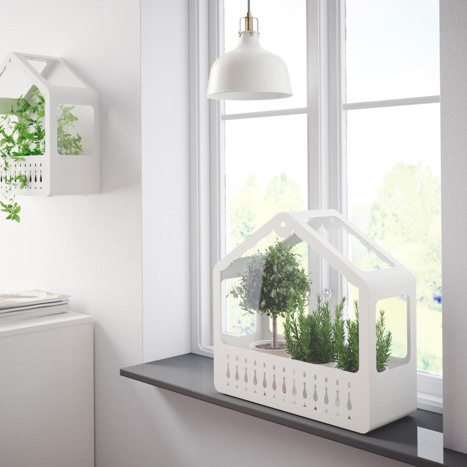 Zioła I Rośliny W Kuchni Pomysły Na Uprawę Zielonych