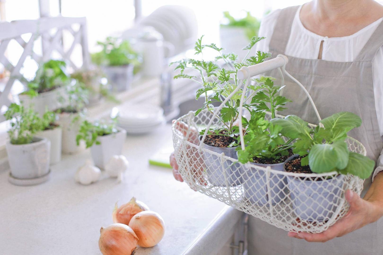 Zioła I Warzywa W Kuchni Czyli Jesienne Witaminy ładny Dom