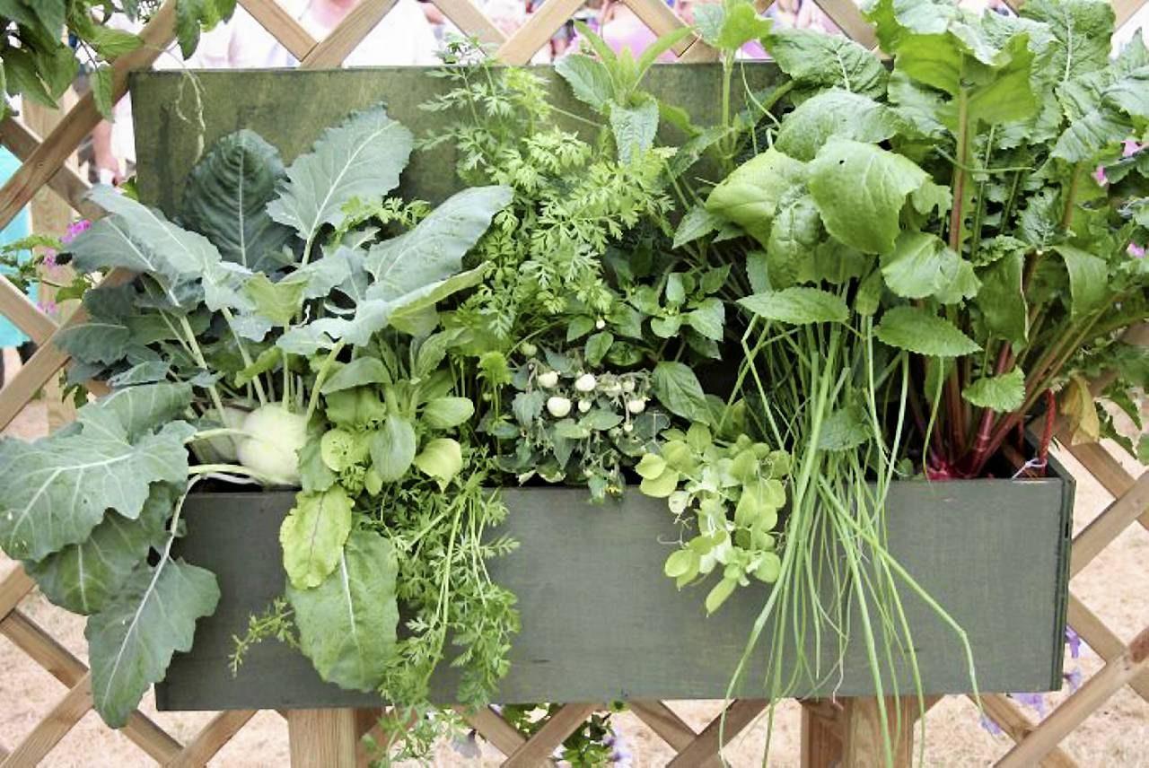 Warzywa I Zioła Na Balkonie Co Tu Urośnie