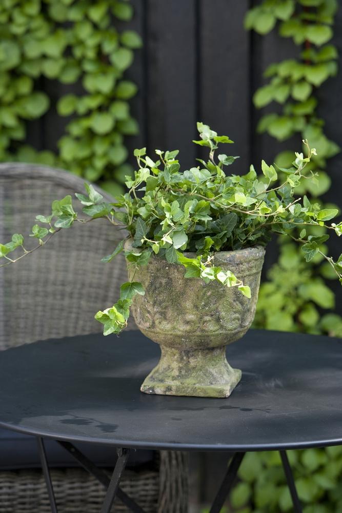 Kiedy Można Wynosić Rośliny Z Domu Na Balkon