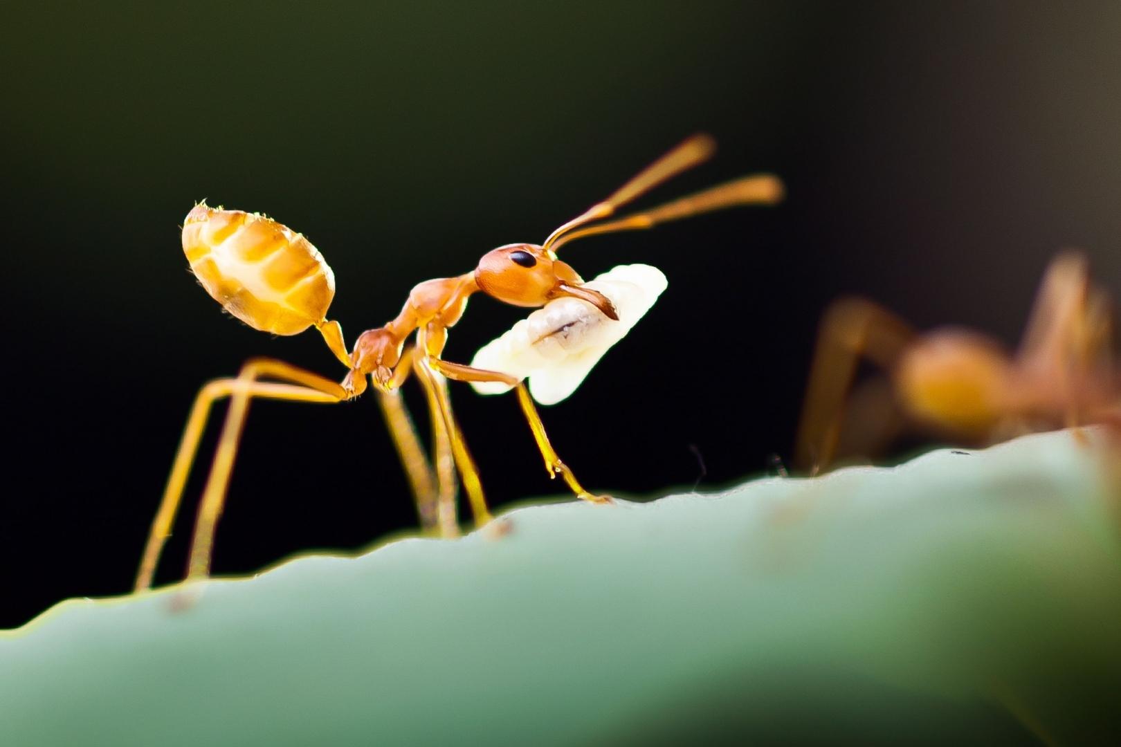Jak Wytępić Mrówki Sposoby Na Te I Inne Uciążliwe Owady