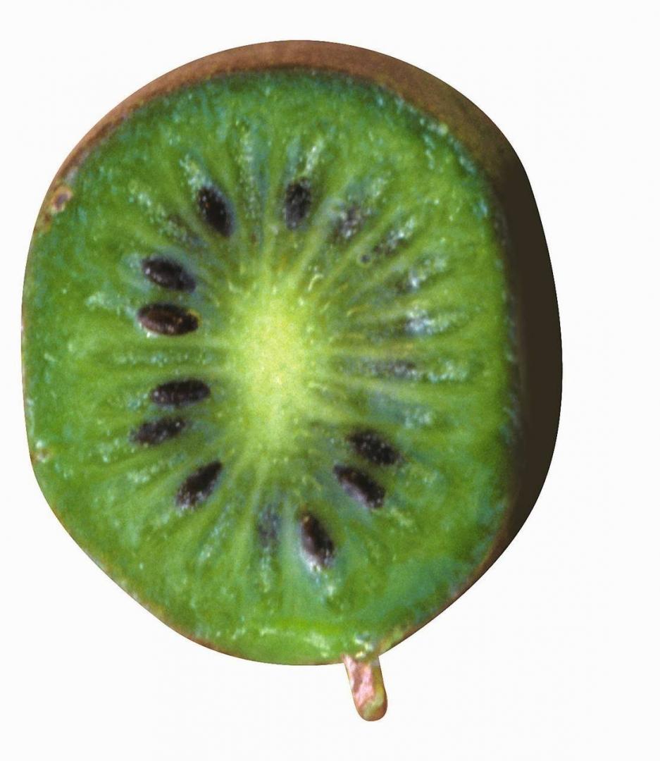 Aktinidia Aktinidia Arguta Uprawa I Pielęgnacja Mini Kiwi