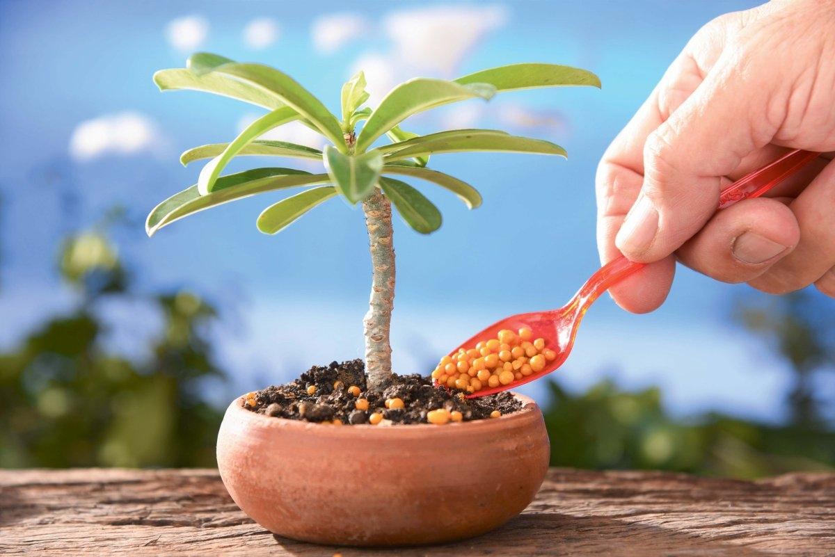 Nawozic Czy Nie Nawozic Rosliny Doniczkowe Jesienia E Ogrody Porady
