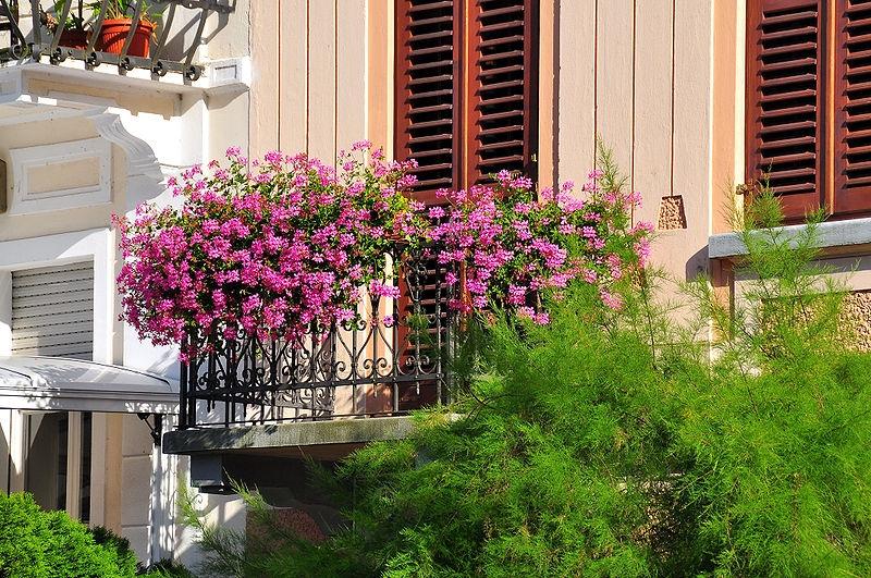 Sadzimy Rośliny Balkonowe E Ogrody