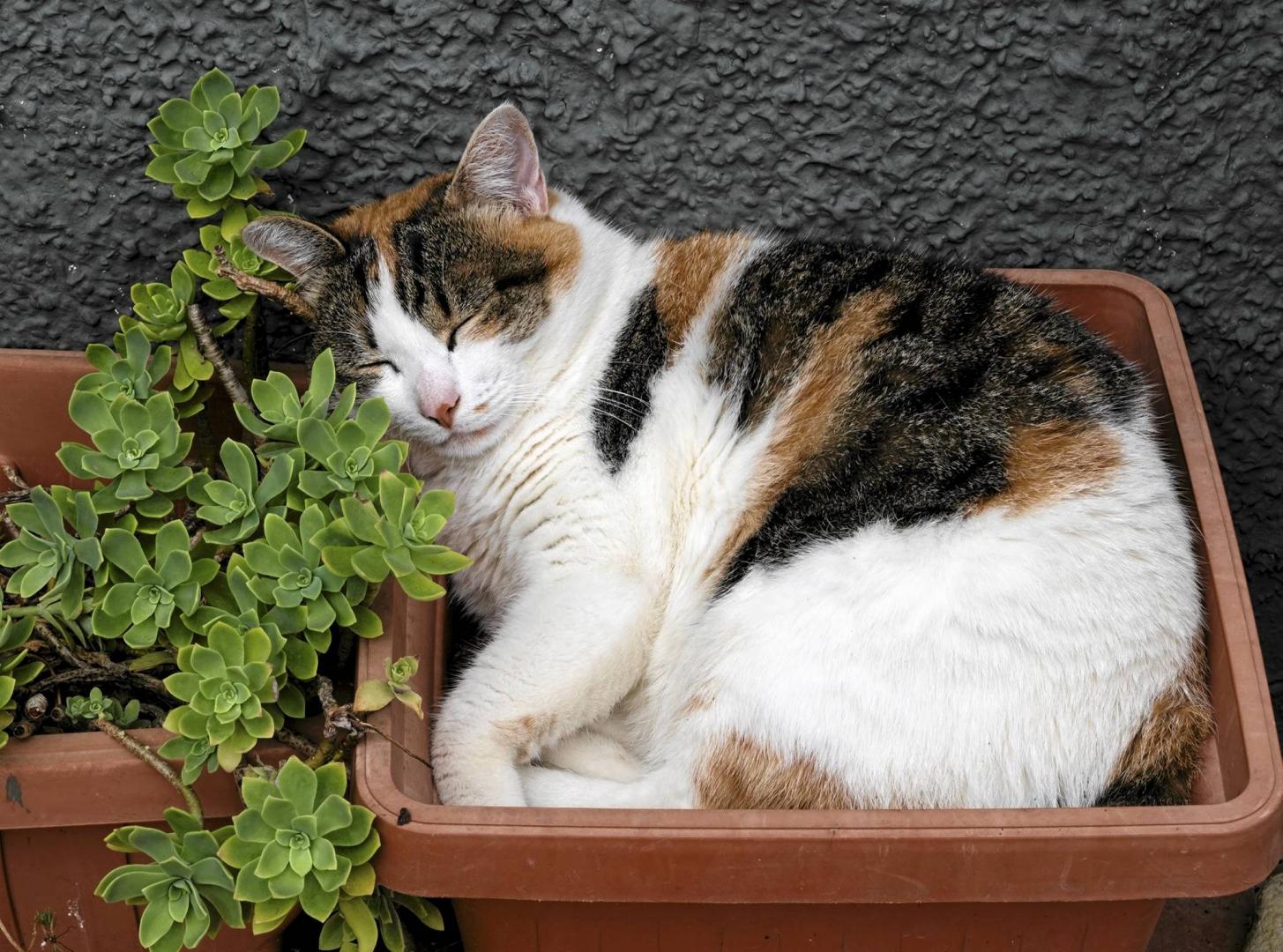 Kot W Ogrodzie E Ogrody