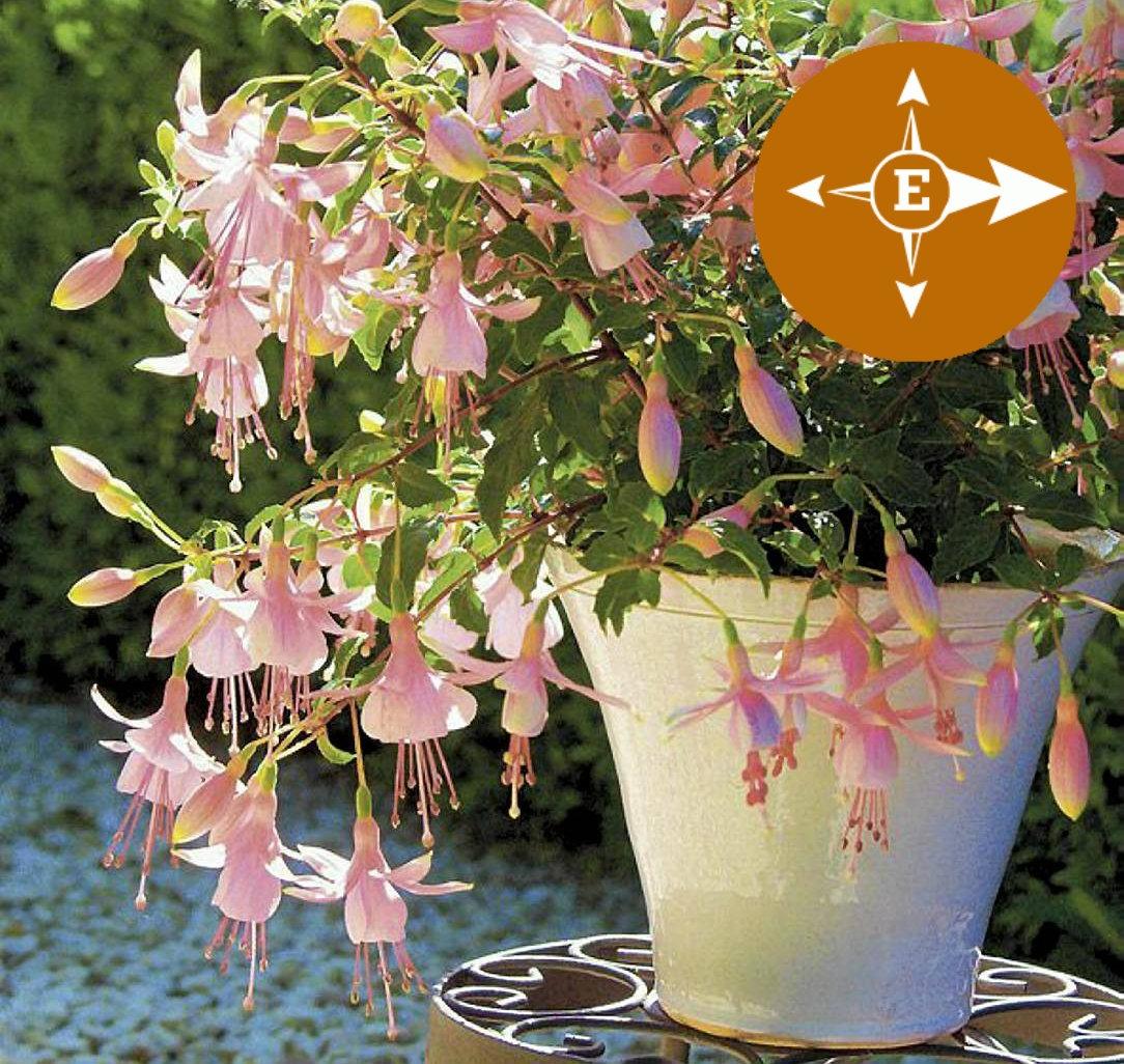 Rośliny Na Balkon Wschodni Jakie Rośliny Dobrze Znoszą Słońce