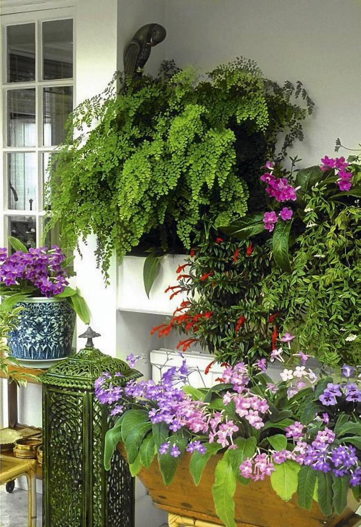 Ogród Zimowy Na Balkonie Rośliny Na Zabudowany Balkon