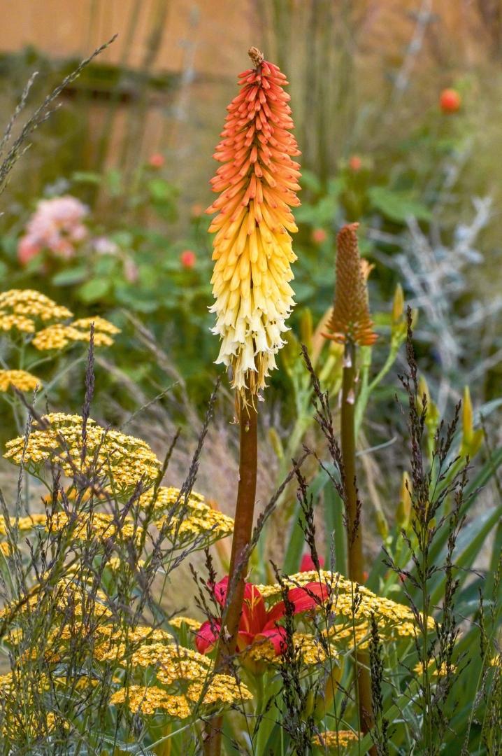 Kwiaty Kwitnące We Wrześniu Rośliny Późnego Lata