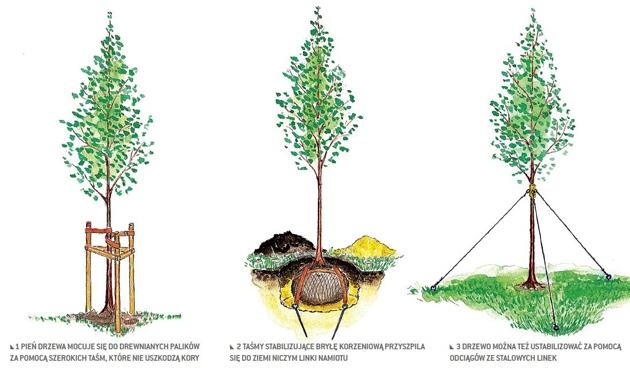 Pora sadzenia drzew
