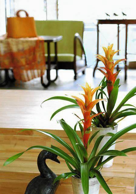 Jak Dobrać Doniczkę I Roślinę Do Wnętrza E Ogrody