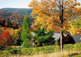 Jak dbać o ogród jesienią?