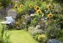 Helianthus 'Summer Breeze'(Sonnenblumen), Agastache'Blue Fortune' (Duftnessel), Coreopsis 'Moonbeam'(M dchenauge), Lagurus 'Bunny Tails' (Hasenschwanzgras), Colakraut (Artemisia), Verbena bonariensis (Eisenkraut) , Rudbeckia 'Goldsturm' Echinacea 'Sunrise' (Sonnenhut), Cosmos (Schmuckk^rbchen), Cimicifuga (Silberkerze), Lobelia (M nnertreu) SLOWA KLUCZOWE: msgnp11 000 lila Duft Stauden Einj hrige blau Gr ser draussen Sp tsommer Beet Garten Artemisia abrotanum var. maritima Helenium Sonnenbraut Sommerblumen Sommer gelb wei? quer Sitzplatz Liege