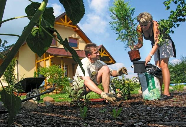 sadzenie drzew, sadzenie roślin