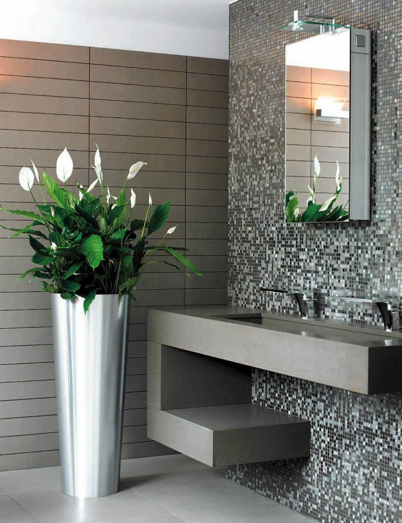 Najlepsze Kwiaty Do łazienki