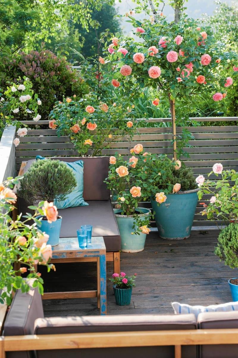 Balkon Róże Nieduże ładny Dom