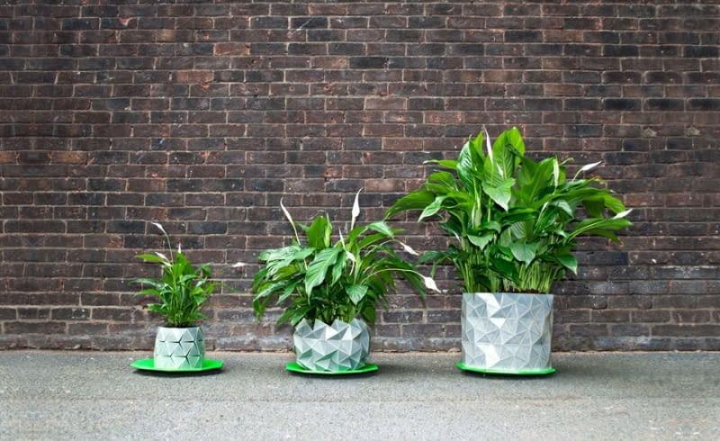Zasady Nawożenia Kwiatów W Mieszkaniu E Ogrody