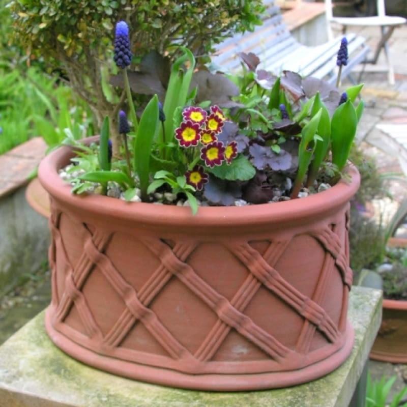 Wiosenne Donice Pełne Kolorowych Kwiatów E Ogrody