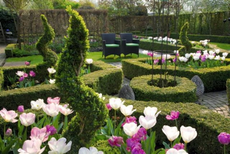 Formal country garden with garden rooms, seating area with parterres filled with Tulips 'Purissima', pink tulips and spiral topiary