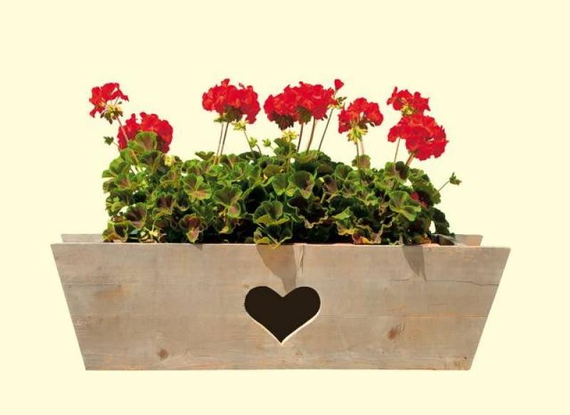 Kwiaty W Skrzynkach Cały Ogród Na Parapecie E Ogrody