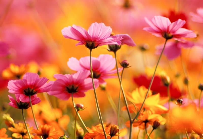 Kwiaty Ogrodowe Naszych Babc Najpiekniejsze Kwiaty Do Ogrodu E Ogrody Rosliny